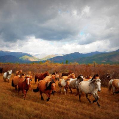 Jak jaki na niebie… czyli konno przez Mongolię