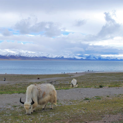Tymy na szlaku: odc.1 – Chiny i Tybet, Ola i Marcin Tym-Czarnoccy